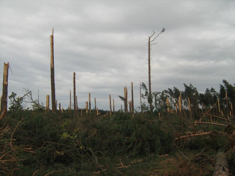 Krajobraz po tornadzie Bory Tucholskie 2012