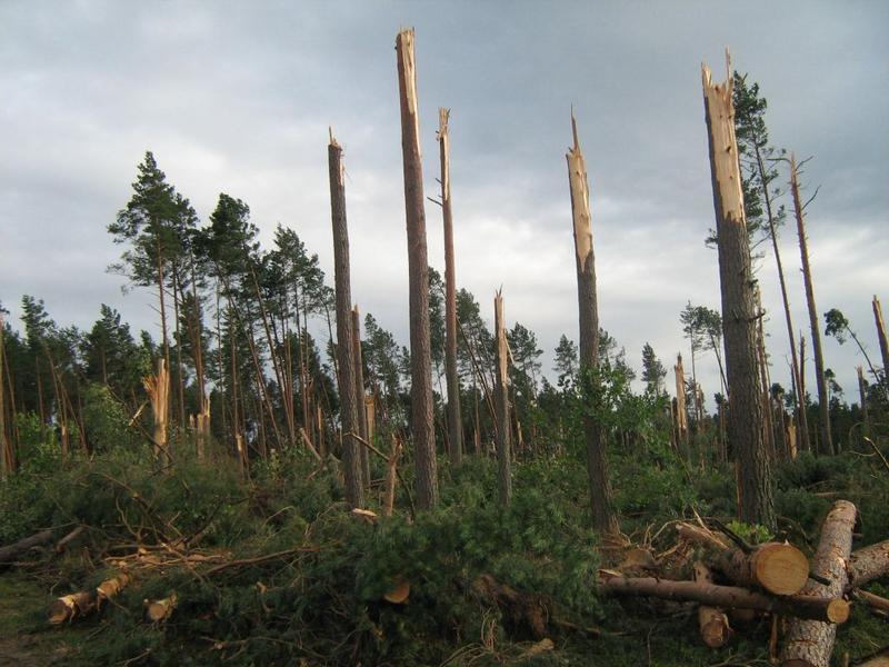 Skutki tornada w Borach Tucholskich