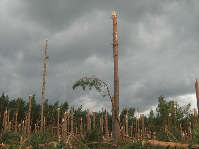 Bory Tucholskie w objęciach tornada 2012