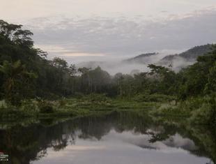 Studencki konkurs architektoniczny na projekt obserwatorium przyrody w Brazylii. NOA South America 2014 Competition