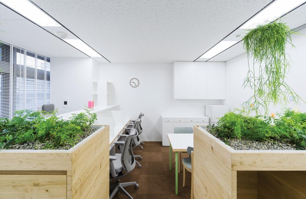 Klinika Koshida