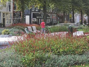 Zielona Holandia