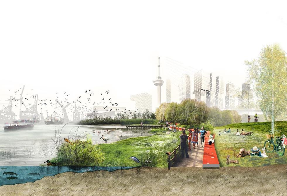 Holandia: miasta w obliczu zmian klimatycznych