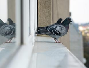 Jak zmniejszyć liczbę kolizji ptaków ze szklanymi fasadami – webinar