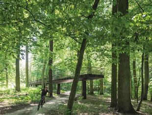 Rewitalizacja lasu / Iława