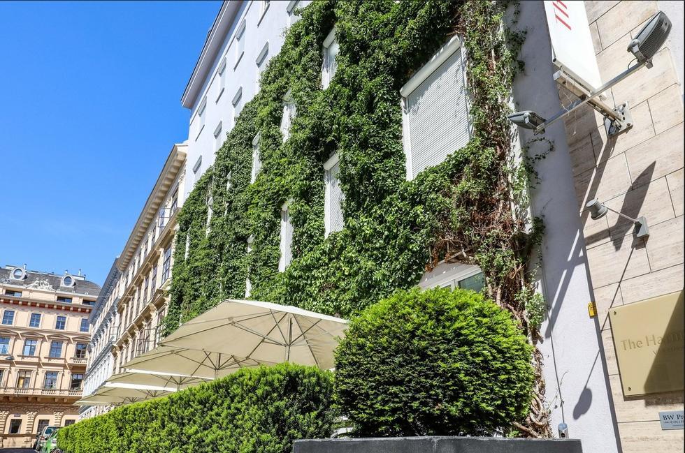 Wiedeń finansuje zazielenianie fasad, dachów i dziedzińców. Tak walczy ze zmianami klimatu